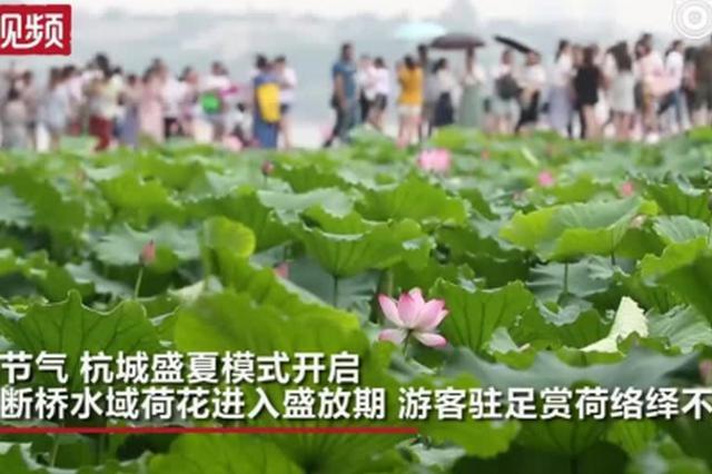 """""""小暑""""开启盛夏模式 杭州西湖赏荷正当时"""