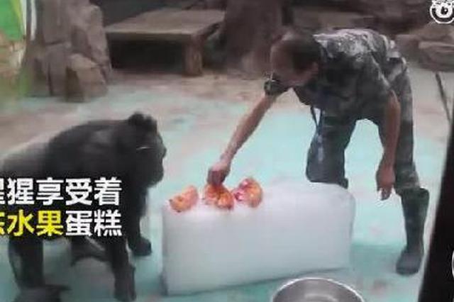 避暑大戏!郑州动物园里萌宠们花式降温