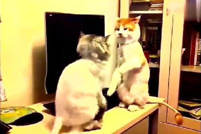萌宠猫咪前一秒还相亲相爱后一秒说打就打