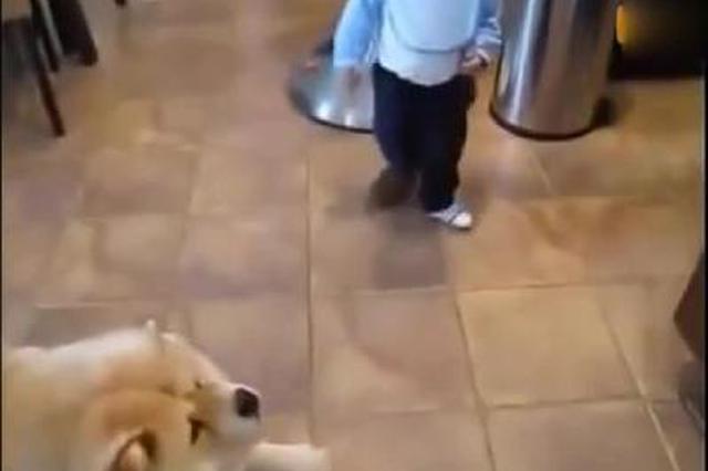 不会说话的宝宝指挥狗狗,萌宝对萌宠,萌翻了!