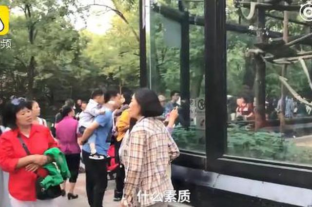 动物园猴子被投食辣条辣到崩溃 网友怒了