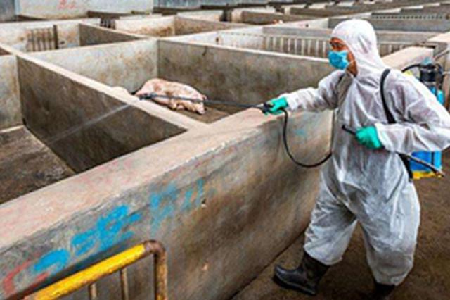 遼寧省鐵嶺市、盤錦市排查出非洲豬瘟疫情