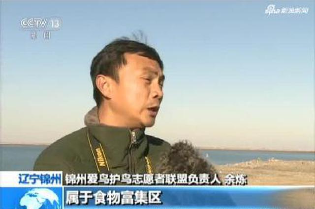 辽宁锦州:首批灰鹤飞抵小凌河入海口