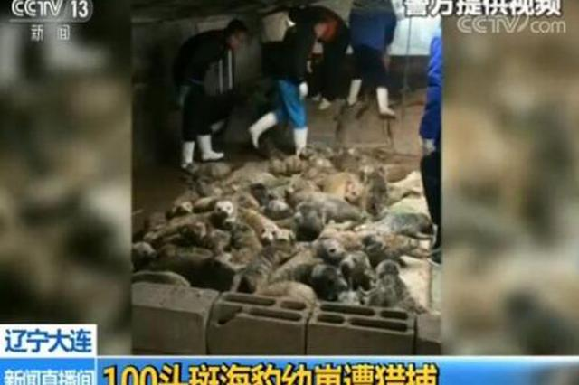 百头斑海豹被猎捕38头死亡 盗猎一再发生责任在谁