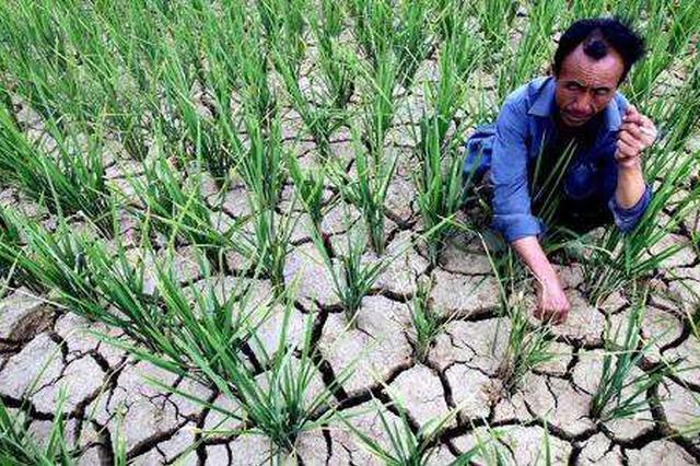辽宁西部降雨偏少土壤缺墒 抗旱保春播全面展开