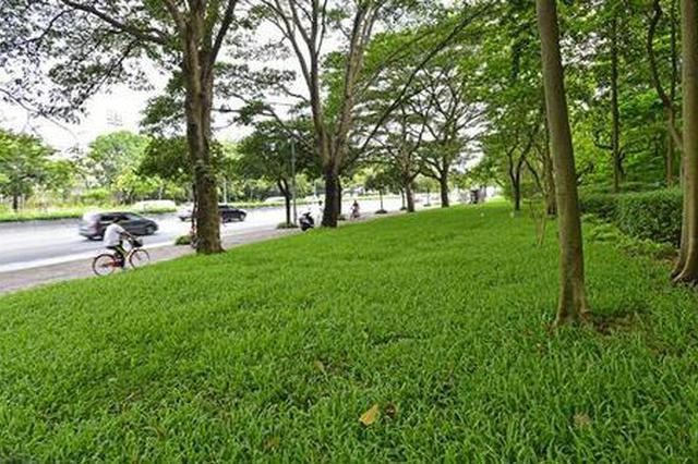 辽宁大力开展国土绿化 完成造林114万余亩