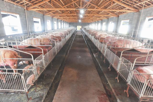 今年年底前我国生猪产能有望探底回升