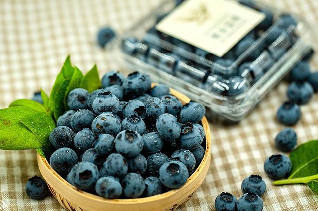 辽宁相册——辽宁土特产 丹东鹭乡蓝莓:生长在黄金纬度的蓝莓