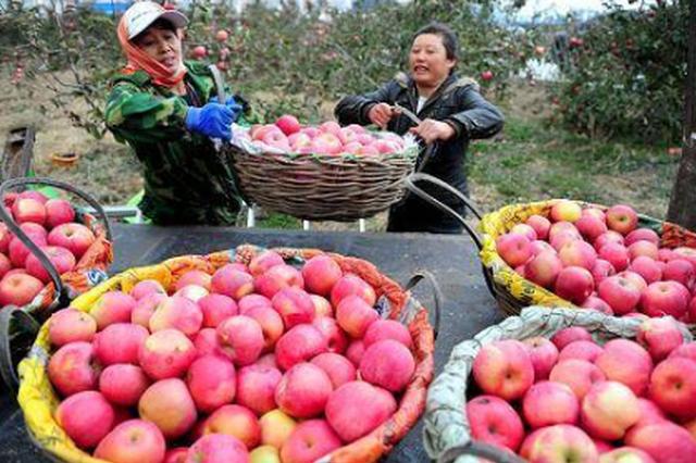 辽宁品牌故事|全世界有7500种苹果,这个是咱辽宁人选育出来