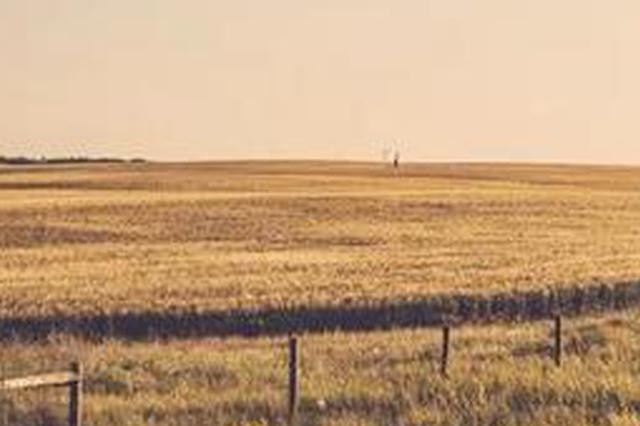 遼寧明確今年農業農村十大目標任務