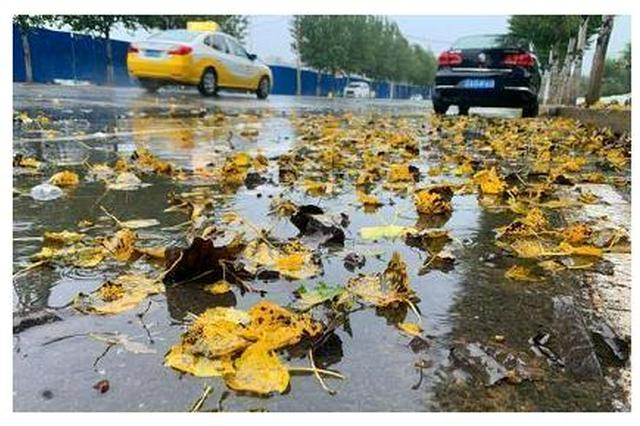 沈阳近期阵雨频繁气温波动 带好雨具多穿衣