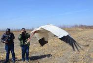 受伤白鹤沈阳获救 獾子洞湿地放飞