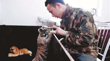 """沈阳小虎被弃 与""""奶爸""""相处融洽"""