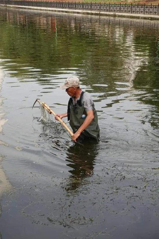 工作人员在清理运河里的水草等杂物。