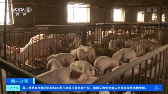 央视记者走访辽宁疫区猪场:复养成功 出栏收益增高