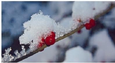 昨日沈阳迎初雪 沈北下得最大