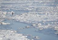 大连渤海海域大面积结冰
