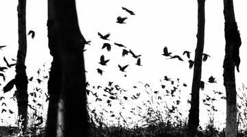 《浪眼观辽宁》:水墨鸟群