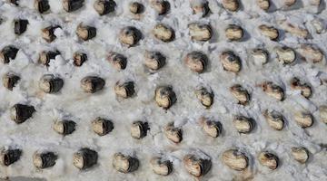 沈阳女子用1000多条鱼垒成雪塔存年货