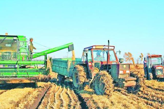 辽宁将划定4300万亩水稻、玉米生产功能区
