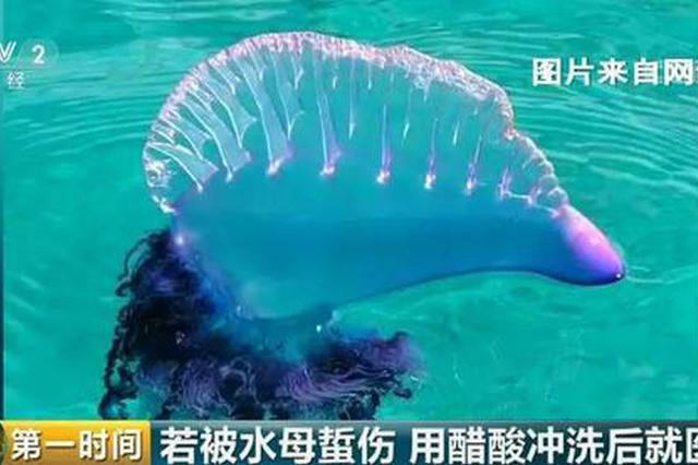 紧急提醒 近期去泰国度假小心这种剧毒致命生物