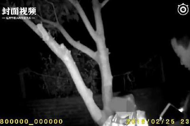 大人赌气5岁小孩无人愿意照顾 竟被亲奶奶绑树上