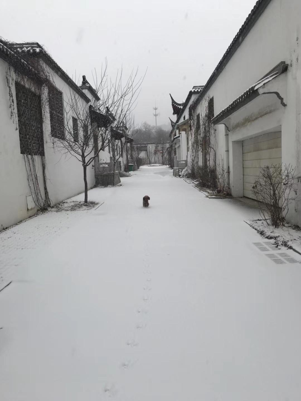 沈阳迎2018年首场降雪