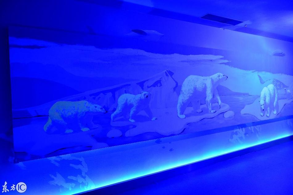 沈阳一商场现3D极地海洋长廊