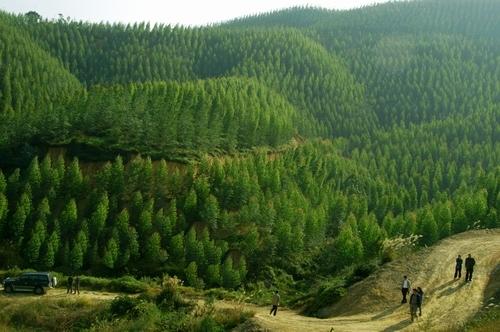 我市完成春季造林3.52万亩