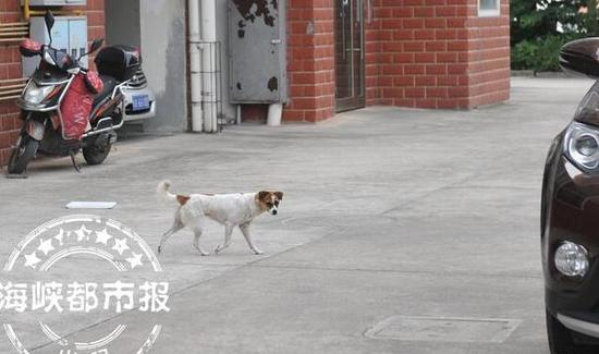 """流浪狗白天也在小区内""""闲逛"""""""