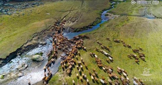 羊群在夏秋牧场之间迁徙。图片来源/《风味人间》视频截图