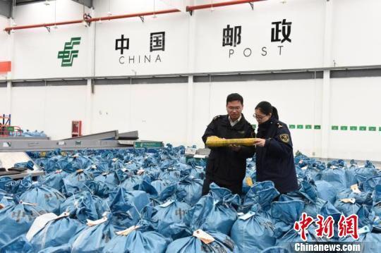 图为杭州海关隶属义乌海关关员查看准备出境的邮件包裹 朱路鹏 摄