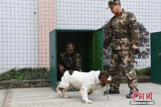 """一只搜救犬正在进行""""衔取""""训练。 中新社记者 王远 摄"""