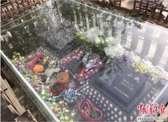 """北京六环外一处""""宠物墓地"""""""