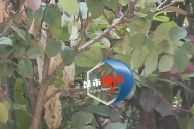 长沙:天降污秽物业主频中招  恶作剧者已被锁定