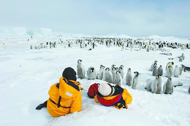 元旦春节出境游升温 南极旅游迎来最高峰
