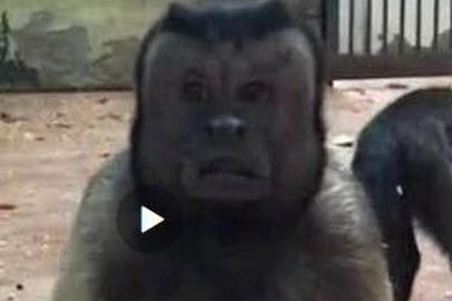 """网上爆红的""""人脸猴""""竟来自天津动物园"""