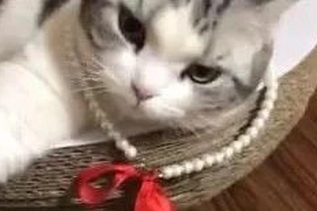 咱天津的猫姥姥 网友:怀疑我是抱来的它是亲生的