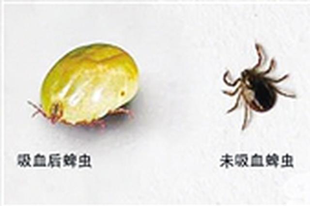 亲近大自然要小心草里这种虫 它可能会要你命