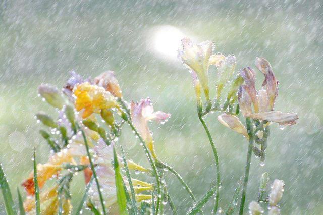 今日冷空气造访南宁 气温清凉而舒适出门记得带伞