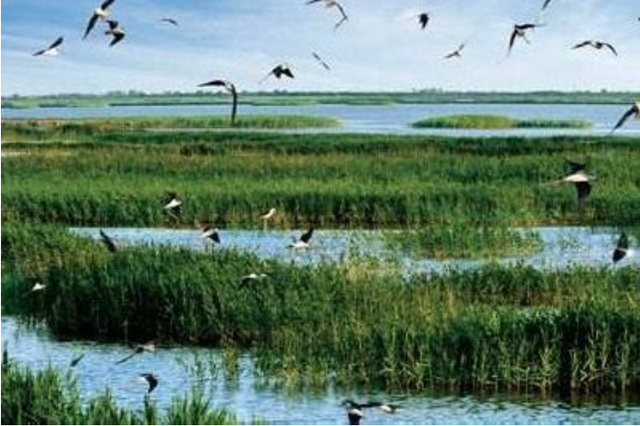 天津已整改生态违法点位319个 恢复湿地1.44平方公里