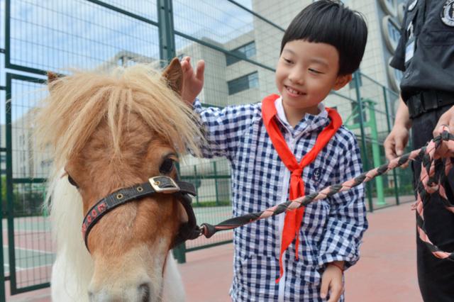 杭州一所小学养了两匹马 学生通过社会实践筹集马粮