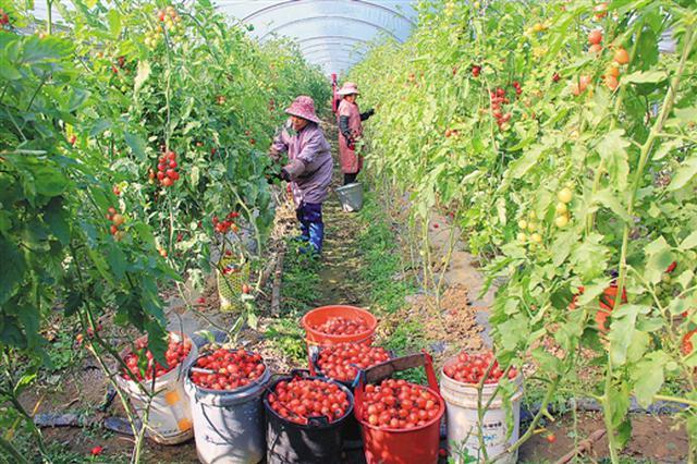 南宁:果蔬产业势头好 家庭经营净收入成主力