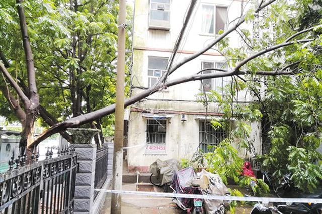南宁一小区外墙大树倒了挡住入口 居民进出提心吊胆