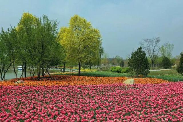 天津这里的春光惊艳了 不去等一年