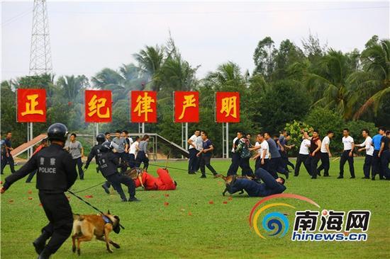 警犬对群体性事件中持有武器的危险分子进行扑咬。南海网记者高鹏于警犬汇报演练场景中摄