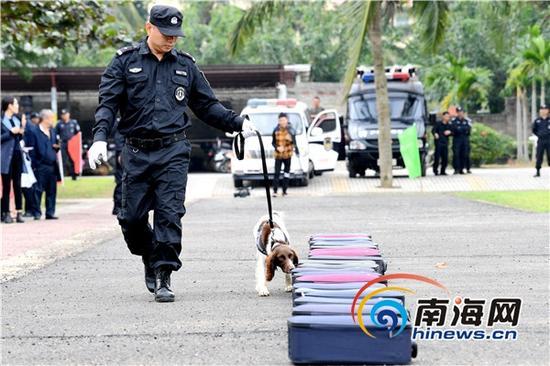 警犬从20个各式箱包中搜查毒品。南海网记者高鹏于警犬汇报演练场景中摄