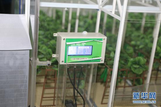 """图为通过加在大棚上的""""棚司令""""农民可以随时监测农作物的生长数据。(新华网王安摄)"""