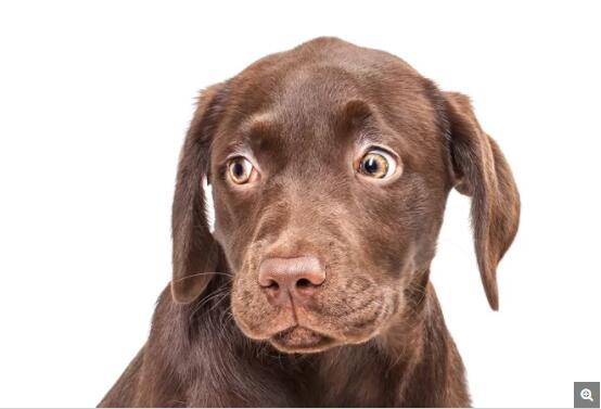 对寻找粪便的狗来说,粪便的新鲜程度是重要的考虑因素,调查显示它们更喜欢吃排出不超过两天的粪便。
