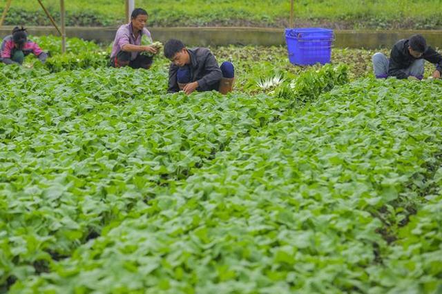 海南省人大代表建议:引导外地菜农提高组织化程度